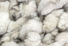 Background of a fur texture of expensive fur-bearing Stock Photography