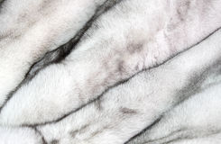 Background of a fur texture of expensive fur-bearing Stock Photo