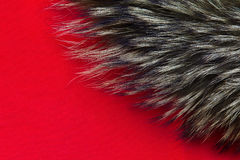 Background of fur. The texture of the fur on a red background Royalty Free Stock Images