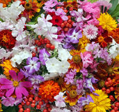 Background of garden flowers, top view. Stock Image