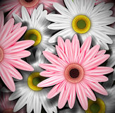 Background with gerberas Royalty Free Stock Images