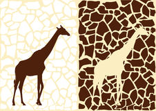Background from giraffes Stock Photography