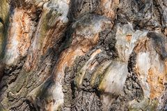 Background gnarled tree Stock Photography