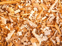 Background of the golden curls of wood shavings Stock Image