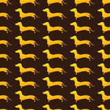Background with golden dachshunds Stock Images