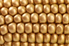 Background of golden indian corn. Close up. Royalty Free Stock Photo