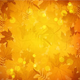 Background with golden leaves Stock Photography