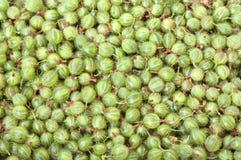 Background of gooseberry. Background of  freshly picked organic gooseberries Stock Photography