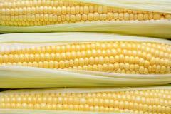 Background of grains of fresh ripe sweet corns closeup. Royalty Free Stock Photos