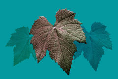 Background of grape leaves Royalty Free Stock Image