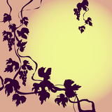 Background with grape- vine Stock Image