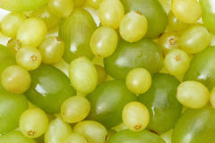 Background of grapes Stock Photos