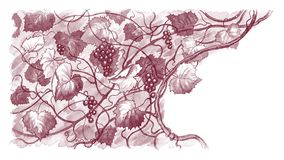 Background with grapes. Handdrawn autumn background with vine and grapes Stock Image