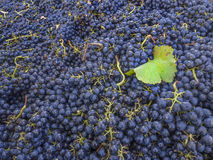Background of grapes Stock Image