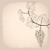 Background with grapevine Royalty Free Stock Photography