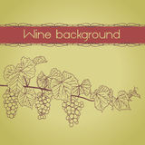 Background with grapevine outline with grapes Stock Image