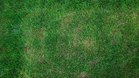 Background of grass Royalty Free Stock Photography