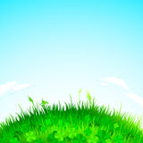 Background grass Royalty Free Stock Photography