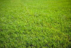 Background of grass Royalty Free Stock Photos