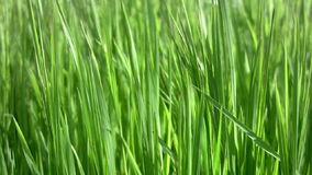 Background with grass Royalty Free Stock Images