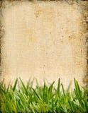 background grass Arkivbilder