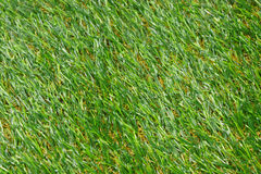 Background of grass. Background of artificial grass outdoor Royalty Free Stock Photos