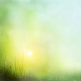 Background of grass. bokeh Royalty Free Stock Images