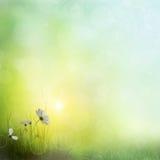 Background of grass. bokeh Stock Photos
