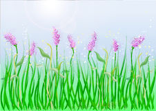Background grass Stock Images