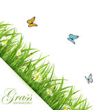 Background with grass and butterflies Royalty Free Stock Photo