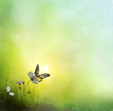 Background of grass. Butterfly on a Flower Royalty Free Stock Image
