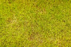 Background of grass in closeup Royalty Free Stock Photos