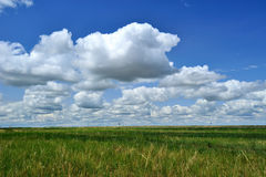 Background of Grass and clouds Royalty Free Stock Photos