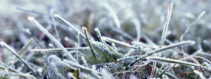 Background of grass covered with hoarfrost. Frost in the morning Royalty Free Stock Images