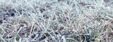 Background of grass covered with hoarfrost. Frost in the morning Royalty Free Stock Photos