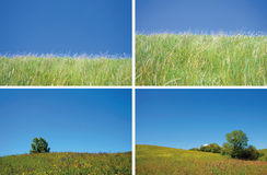 Background with grass and crystal blue sky Royalty Free Stock Photos