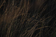 Background of grass Stock Photography