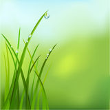 Background with grass and dew. Vector illustration Stock Photo