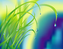Background with the grass and drops Royalty Free Stock Photo