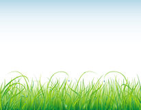 Background with the grass and drops vector illustration