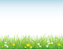 Background with the grass and flowers Royalty Free Stock Photos