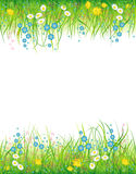 Background with the grass and flowers Royalty Free Stock Photography