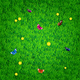 Background with grass, flowers and butterflies Royalty Free Stock Photography