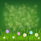Background with grass and flowers. Natural background with green grass and multicolored flowers Stock Photo