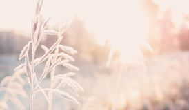 Background with grass, frost and sun. Stock Images