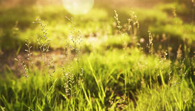 Background with grass Stock Photos