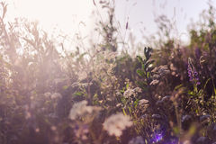 Background with grass in the meadow Stock Image