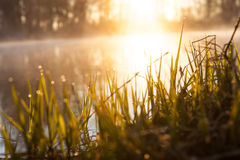 Background, the grass by a River in Sun Stock Photo