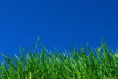 Background of grass and sky. Green grass and blue sky Royalty Free Stock Images