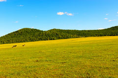 Background of grass and sky. Grassland in Hulun Buir  League of Inner-Mongolia, China Stock Photography